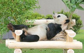 プレゼントされた木製の肘掛けいすでくつろぐジャイアントパンダ「永明」=14日午前、和歌山県白浜町のアドベンチャーワールド